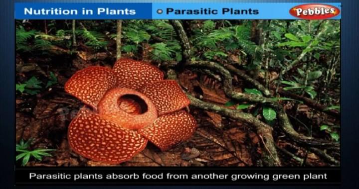 Nutrition In Plants Class 7th Cbse Biology Ncert Cbse Syllabus