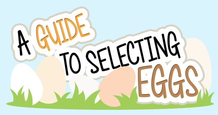 Egg Nutrition Facts & Information: A Guide to Selecting Eggs